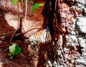Tour a Mariposa Monarca